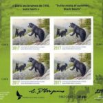 In the mists of summer, black bears by Claudio D'Angelo