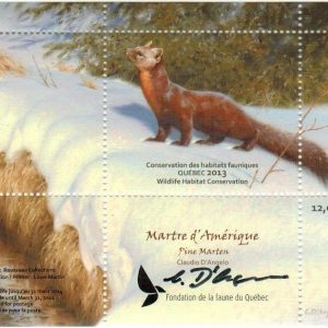 2013 Pine Marten, by Claudio D'Angelo